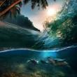 plantilla de paraíso tropical con la luz del sol — Foto de Stock