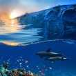 Stock Photo: Two beautiful dolphins swimming underwater through coral reef fu