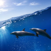 Two dolphins swimming underwater — Stock Photo