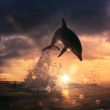 Постер, плакат: Beautiful dolphin jumping