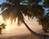 Beau coucher de soleil sur la plage tropicale — Photo