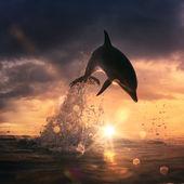 Beautiful dolphin jumping — Stock Photo