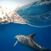 Small flock of dolphins — Stock Photo