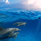 Family of dolphins with baby — Stock Photo