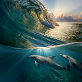 Hawaiian beautiful dolphins — Stock Photo