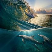 Hawaiian beautiful dolphins — Stock Photo
