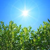 Ramas verdes — Foto de Stock