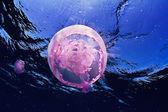 Pink jellyfish — Stock Photo
