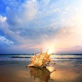 Beach with seashell of giant mollusk — Stock Photo