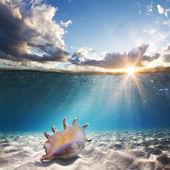 Seashell on sandy bottom — Stock Photo