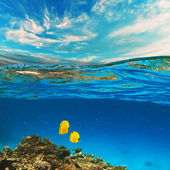 Coral reef with yellow fish — Stock Photo