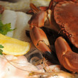 Stock Photo: Fresh crab