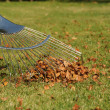 Stock Photo: Autumn leaves and rake