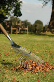 Autumn leaves and rake — Stock Photo