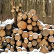 Winter logs — Stock Photo
