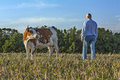 Farmer and cow in a field — Stock Photo