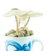 Poison mushrooms isolated in the cup pot - wild mushrooms — Stock Photo