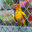 Parrot in birdcage — Stockfoto #37134515