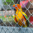 Parrot in birdcage — Foto Stock #37134515