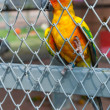 Parrot in birdcage — Stockfoto #37134519
