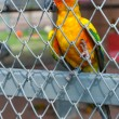 Parrot in birdcage — Foto Stock #37134519