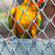 Parrot in birdcage — Foto Stock #37134537