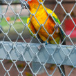 Parrot in birdcage — Foto Stock #37134565