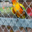 Stock Photo: Parrot in birdcage