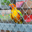 Parrot in birdcage — Foto Stock #37134567