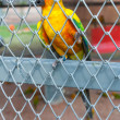 Parrot in birdcage — Foto Stock #37134579