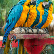 Beautiful Pet Parrot Macaw in the zoo — Stock Photo