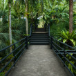 Beautiful garden corridor - natural open corridor in botanic park — Stock Photo