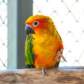 Colorful parrot bird sitting on the perch — Stock Photo