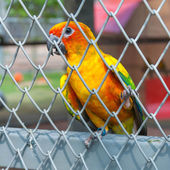 Parrot in a birdcage — Stock Photo
