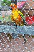 Perroquet dans une cage à oiseaux — Photo