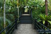 Vacker trädgård korridor - naturliga öppna korridoren i botaniska park — Stockfoto
