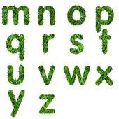 Letters m,n,o,p,q,r,s,t,u,v ,w,x,y,z made of green grass isolated — Stock Photo