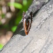 Close up view of butterfly on a trunk — Stock Photo #47162747