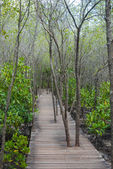 Path in spring green forest - boardwalk in forest — Stockfoto