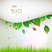Bio concept design eco friendly for summer floral banner — Stock Vector