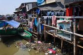Living on a junkyard — Stock Photo