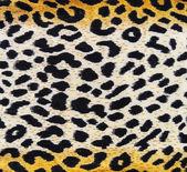 Leopard texture — Stock Photo