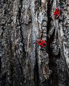 Grunge texturu dřeva s bug — Stock fotografie