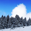 Beautifuk landscape winter forest — Stock Photo
