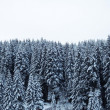 Worest landscape in winter — Stock Photo