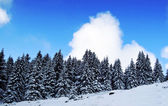 Beautifuk landscape winter forest — Stockfoto