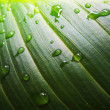 Green leaf and droplets macro — Stock Photo #17665375