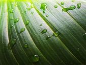緑の葉と水滴のマクロ — ストック写真