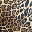 Stock Photo: Abstract leopard macro