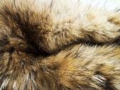 Animal fur texture — Stock Photo